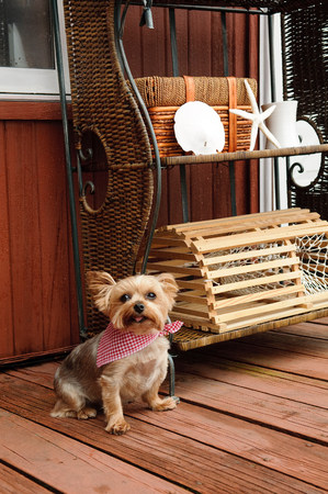 Dog with bandana LANG_EVOIMAGES