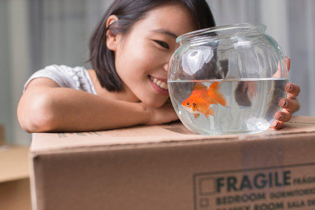 freshwater fish: Young woman looking at goldfish on moving box