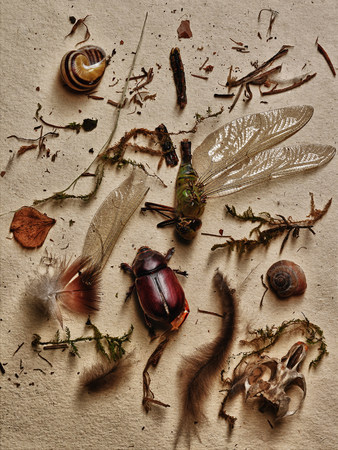 nightmarish: Insects and other elements from nature