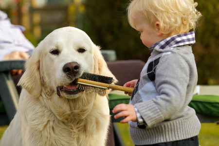 Little boy letting golden retriever chew a brush LANG_EVOIMAGES