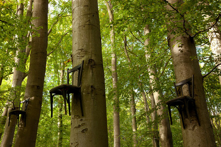 furniture part: Chairs attached to tree trunks high up in forest