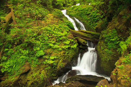 wa: Seasonal creek,Graves Creek area,Olympic National Park,Washington,USA