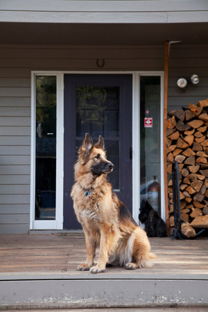 pooches: German shepherd on house porch LANG_EVOIMAGES