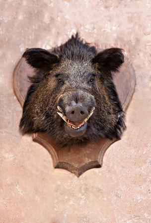 nightmarish: Boars head trophy on a wall
