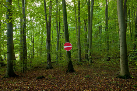 No Entry sign in a forest LANG_EVOIMAGES