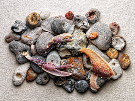 endings: Stones and crab claws on paper LANG_EVOIMAGES