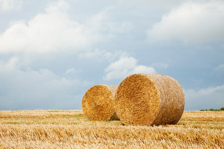 Hay bales in field,Dorset,England,United Kingdom LANG_EVOIMAGES