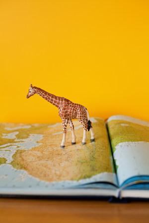 pretending: Giraffe on map of Africa