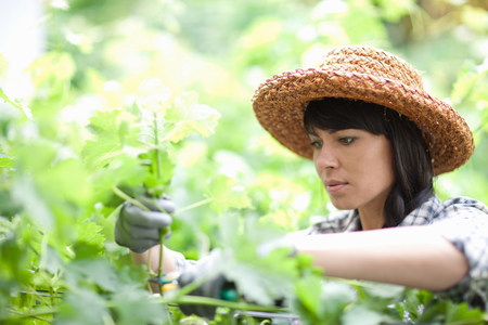 Woman working in garden LANG_EVOIMAGES