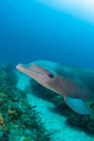 freeport: Dolphin underwater