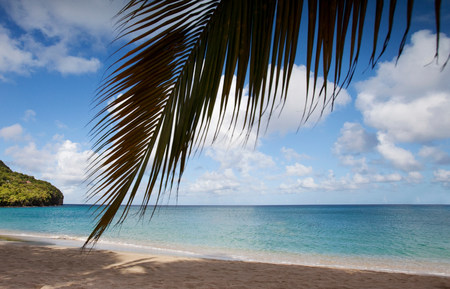 Palm tree hanging over tropical beach