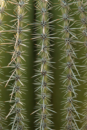 extreme close up: Close up of cactus surface