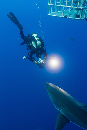 guadalupe island: Swimming with White Shark