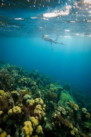 Man snorkeling on tropical coral reef