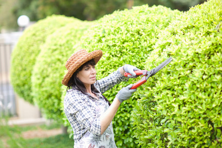 one mature woman only: Woman trimming hedges in garden