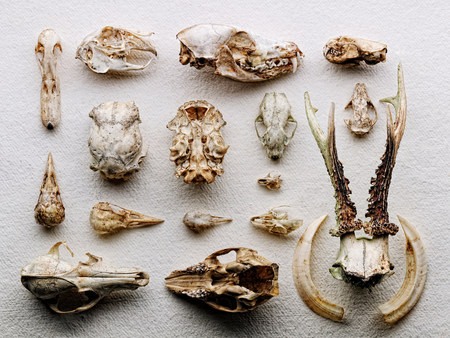 boned: Dried boned arranged on paper