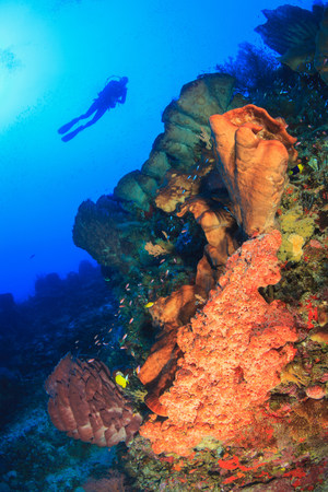 sight seeing: Diver swimming in coral reef LANG_EVOIMAGES