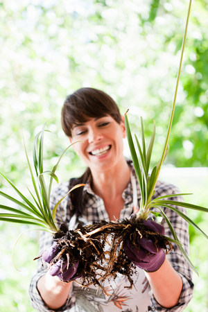 Woman pulling apart plant roots