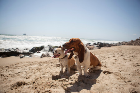 pooches: Dogs panting together on beach
