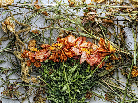 endings: Dried flowers and plants on paper