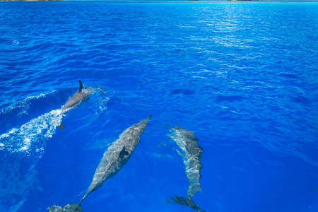 Dolphins swimming in tropical water LANG_EVOIMAGES