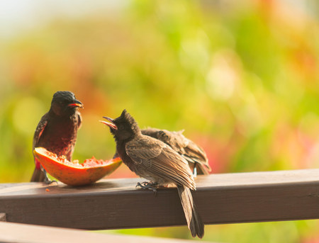 Birds eating fruit on wooden ledge LANG_EVOIMAGES