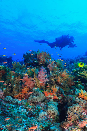 Diver swimming in coral reef LANG_EVOIMAGES