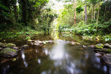 mirroring: Blurred view of river in forest
