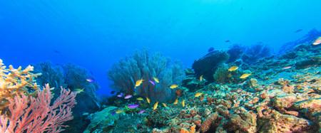 gorgonian sea fan: Fish swimming in coral reef