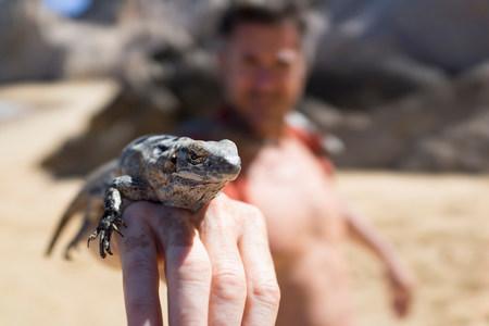 lizard in field: Hombre con lagartija en la mano