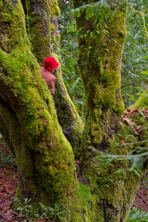 luscious: Woman climbing tree in forest LANG_EVOIMAGES