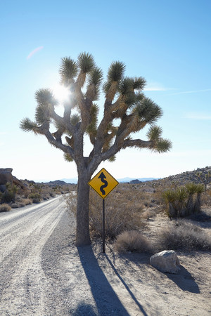 joshua: Tree with a twisting road sign around it LANG_EVOIMAGES
