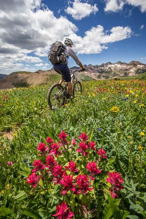 Mountain biker on green trail
