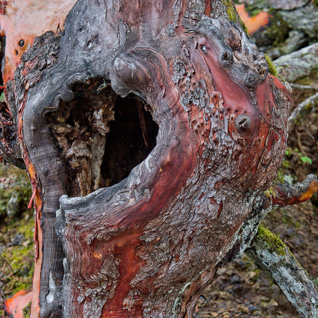 natural formation: Close up of hole in tree
