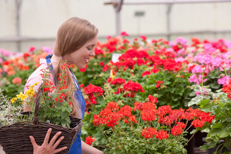 Mid adult woman carrying flowers in garden centre