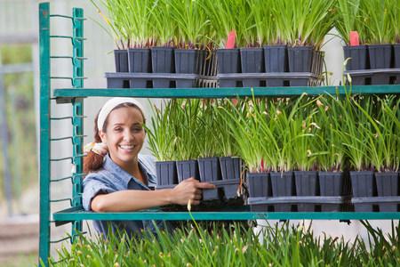 Young sales assistant arranging shelves of plants in garden centre LANG_EVOIMAGES