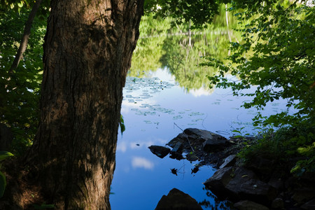 Reflection on calm lake viewed through foliage LANG_EVOIMAGES