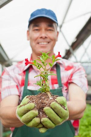 Mature man holding plant in soil in garden centre,portrait
