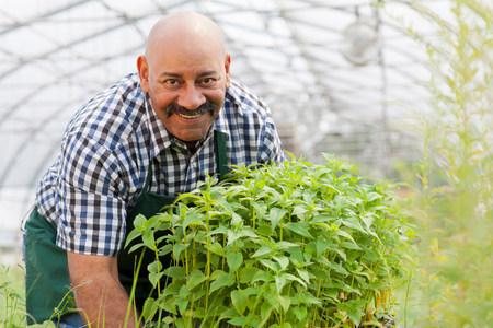 Mature man holding plants in garden centre,portrait LANG_EVOIMAGES