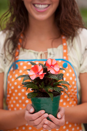 salespeople: Young woman holding plant in garden centre,mid section LANG_EVOIMAGES