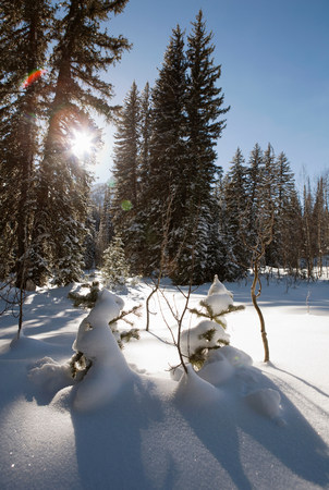 frozen lake: Sunlight through snow covered trees on snowmen in forest