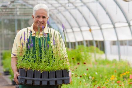 look latino: Senior man holding plants in garden centre,portrait