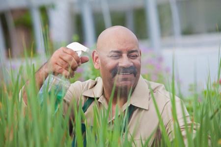 calvicie: Maduro, hombre, uso, insecticida, plantas, invernadero LANG_EVOIMAGES