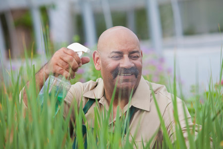Mature man using insecticide on plants in greenhouse