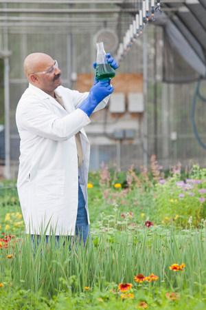 Mature scientist looking at liquid in volumetric flask in greenhouse LANG_EVOIMAGES