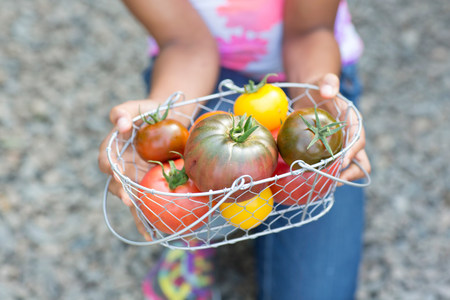 Girl holding basket of ripe tomatoes,cropped image