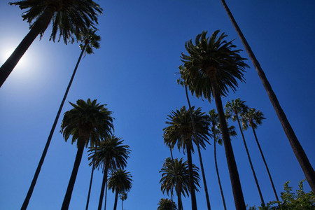 Palm trees over Rodeo Drive,Beverly Hills,California,USA