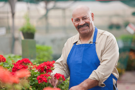 Mature man holding flowers in garden centre,smiling