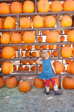 casual clothing 12 year old: Female toddler looking at pumpkin harvest