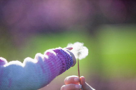 curiousness: Baby girl touching dandelion clock LANG_EVOIMAGES